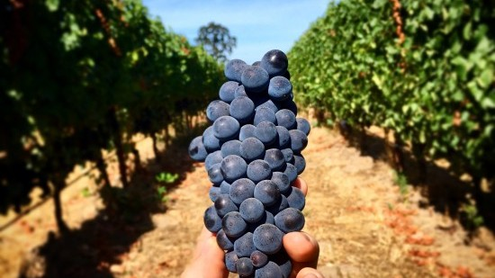 Johan Vineyards Oregon Wine Passport